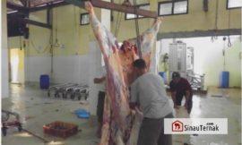 Proses Pemotongan Ternak Di Rumah Potong Hewan (RPH)