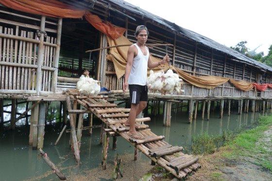 kandang tradisional ayam broiler terbuka