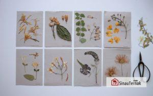 Mengenal Herbarium : Definisi, Manfaat, dan Cara Pembuatan