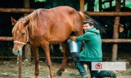 Kandungan Susu Kuda Mirip ASI