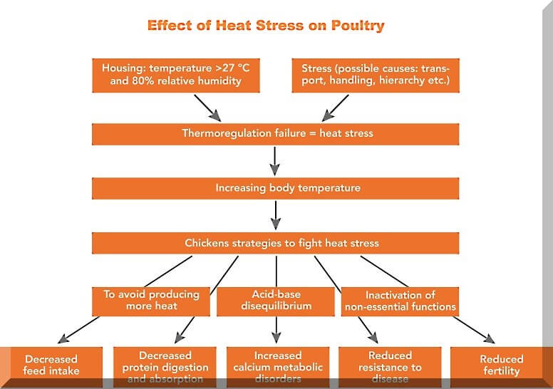 heat-stress-in-poultry